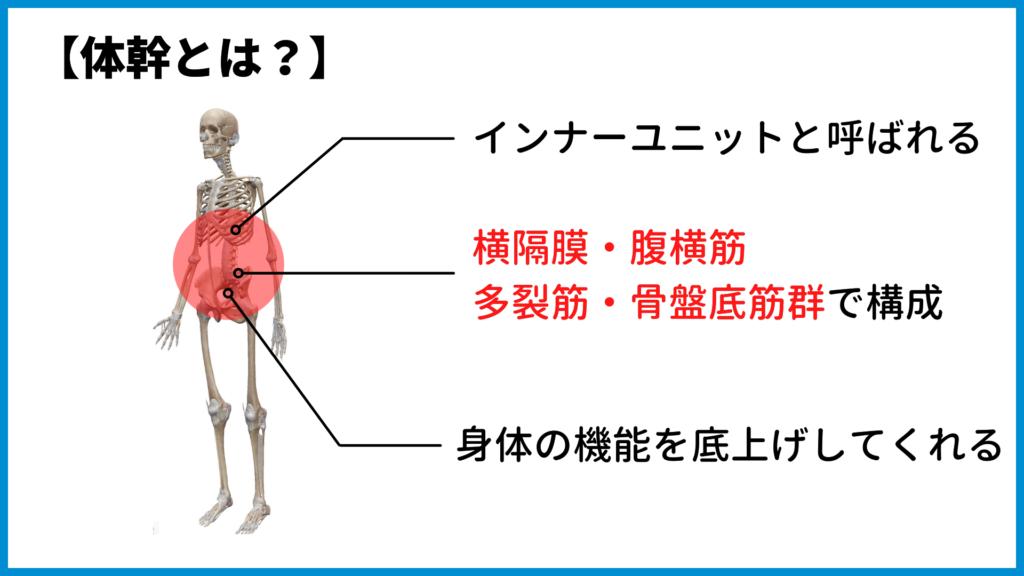 インナーユニットと体幹の解説画像